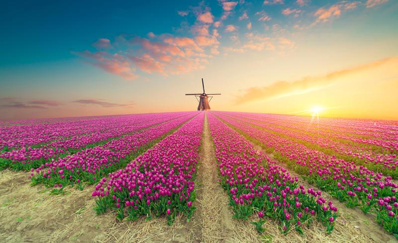 Tulpenblüte in Holland - Keukenhof mit Schiffahrt -