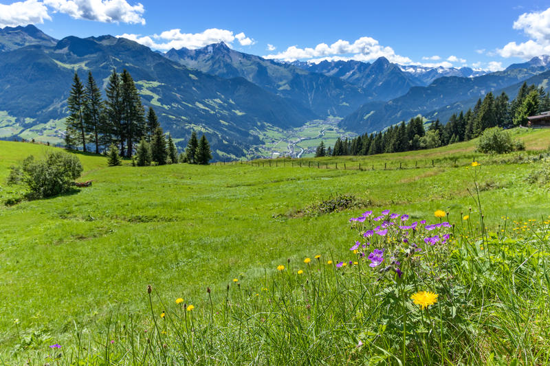 Alpine mountain view with bright green meadow in the foreground. Austria, Tirol, Zillertal, Zillertal High Alpine Road